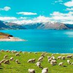 ニュージーランド透析