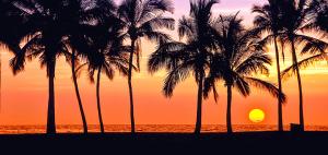 ハワイ島透析